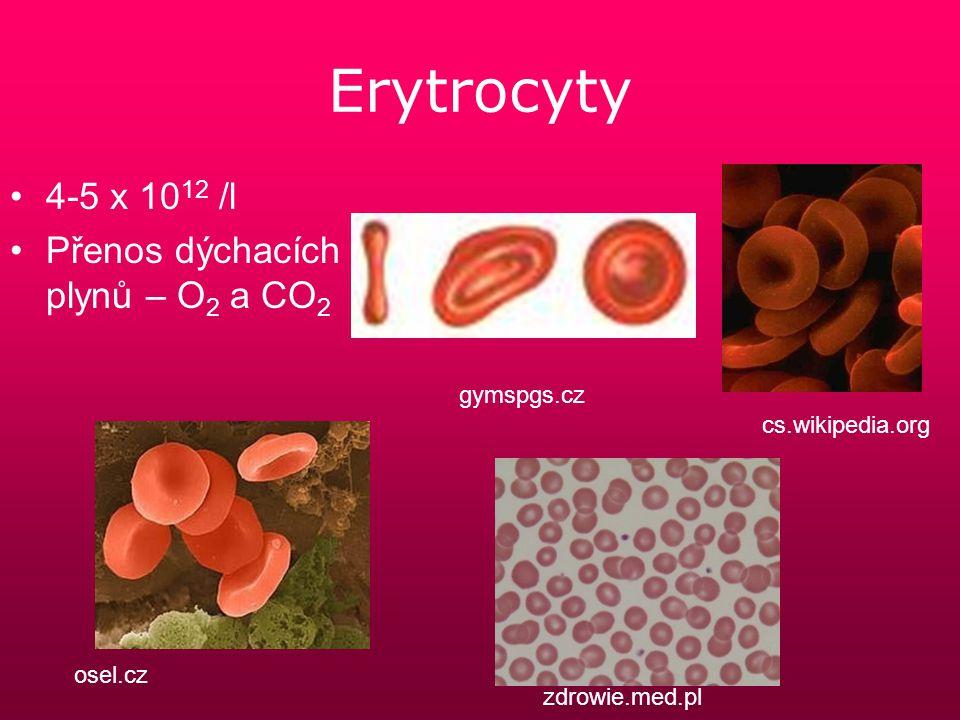 Erytrocyty 4-5 x 1012 /l Přenos dýchacích plynů – O2 a CO2 gymspgs.cz