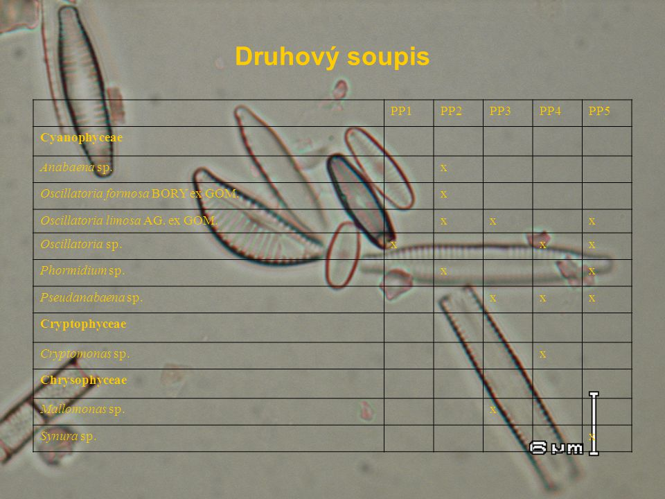 Druhový soupis PP1 PP2 PP3 PP4 PP5 Cyanophyceae Anabaena sp. x