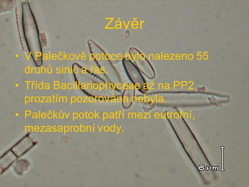 Závěr V Palečkově potoce bylo nalezeno 55 druhů sinic a řas.