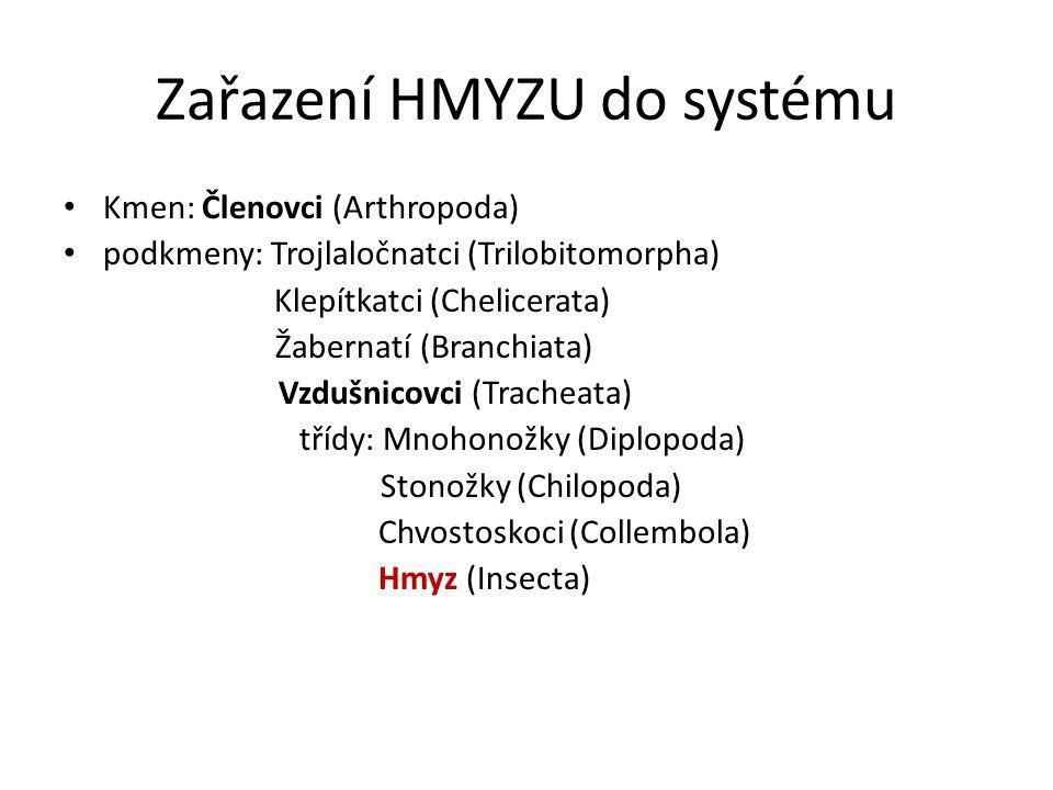 Zařazení HMYZU do systému