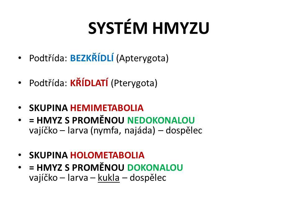 SYSTÉM HMYZU Podtřída: BEZKŘÍDLÍ (Apterygota)
