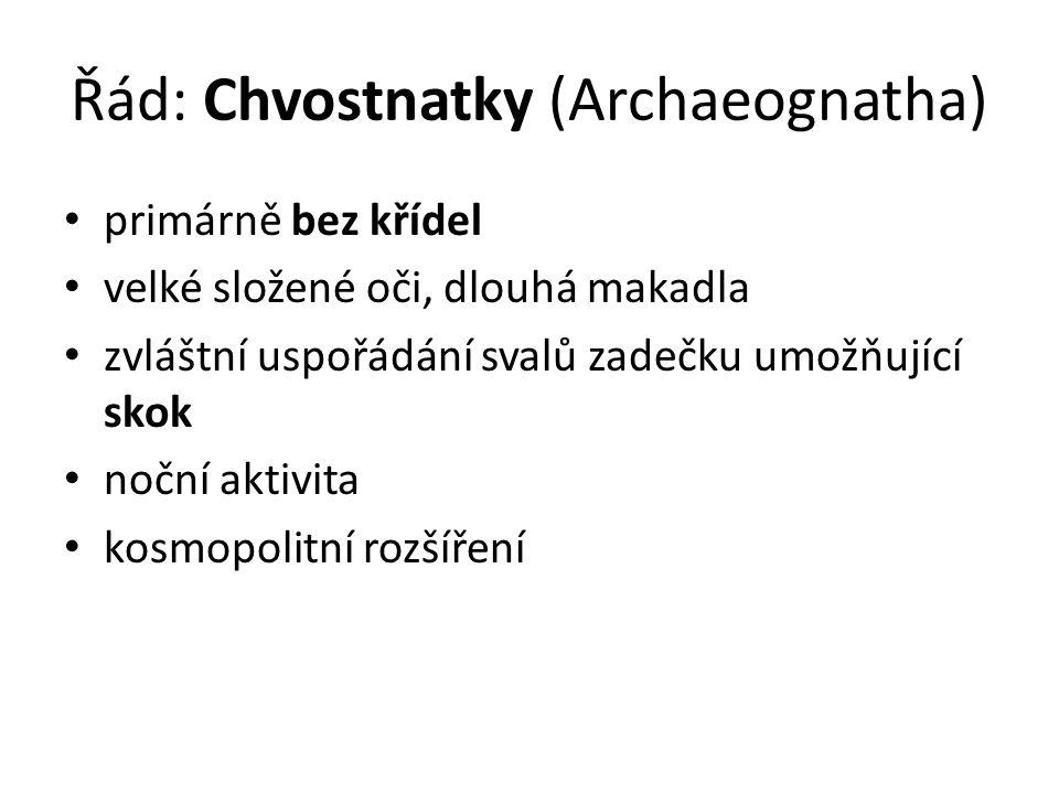 Řád: Chvostnatky (Archaeognatha)