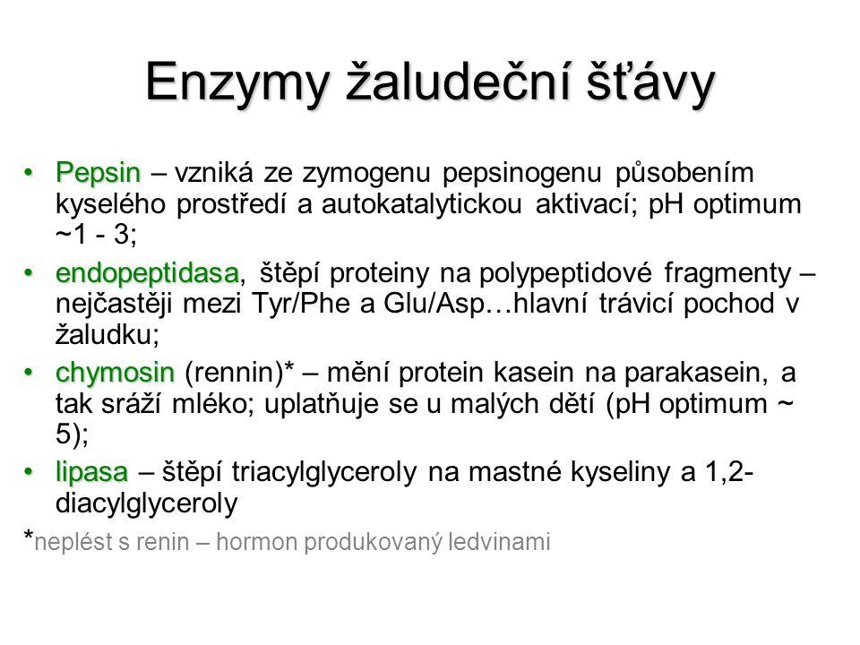 Enzymy žaludeční šťávy
