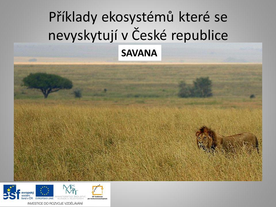 Příklady ekosystémů které se nevyskytují v České republice