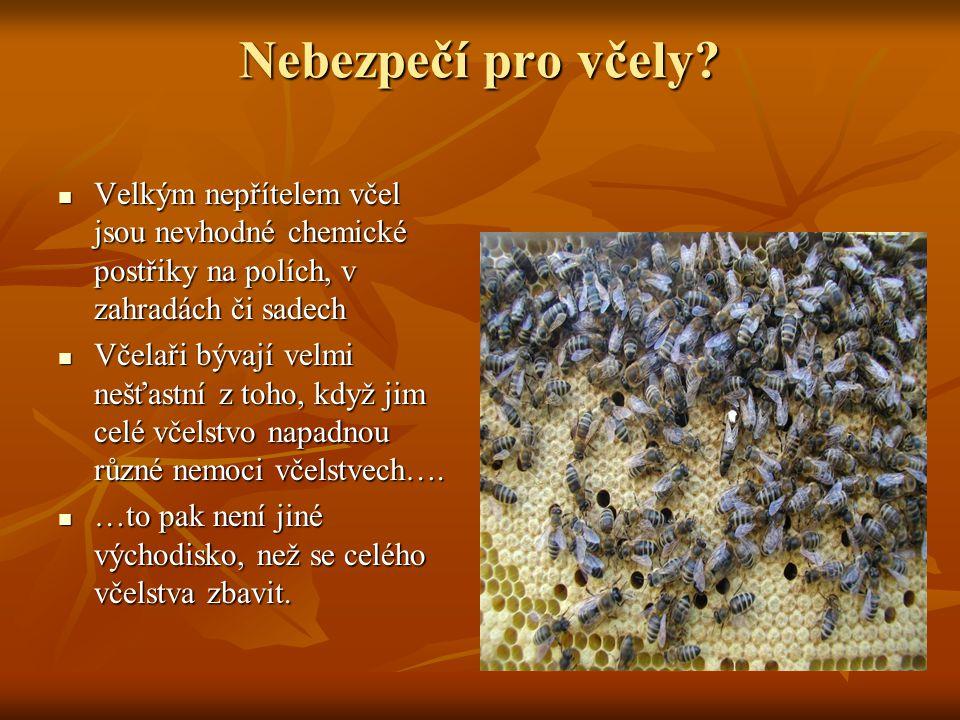 Nebezpečí pro včely Velkým nepřítelem včel jsou nevhodné chemické postřiky na polích, v zahradách či sadech.