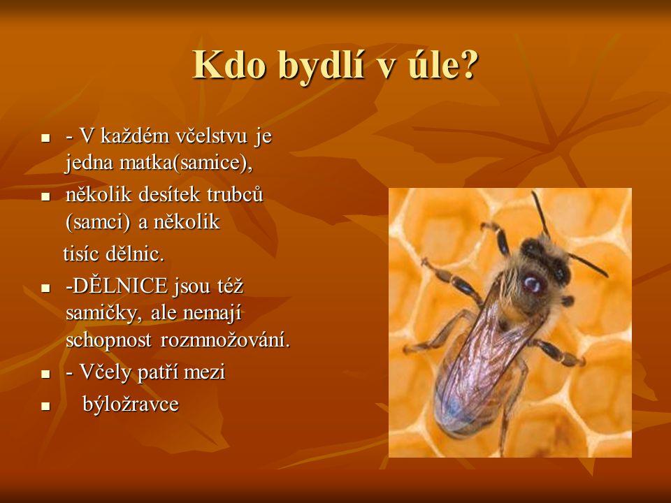 Kdo bydlí v úle - V každém včelstvu je jedna matka(samice),
