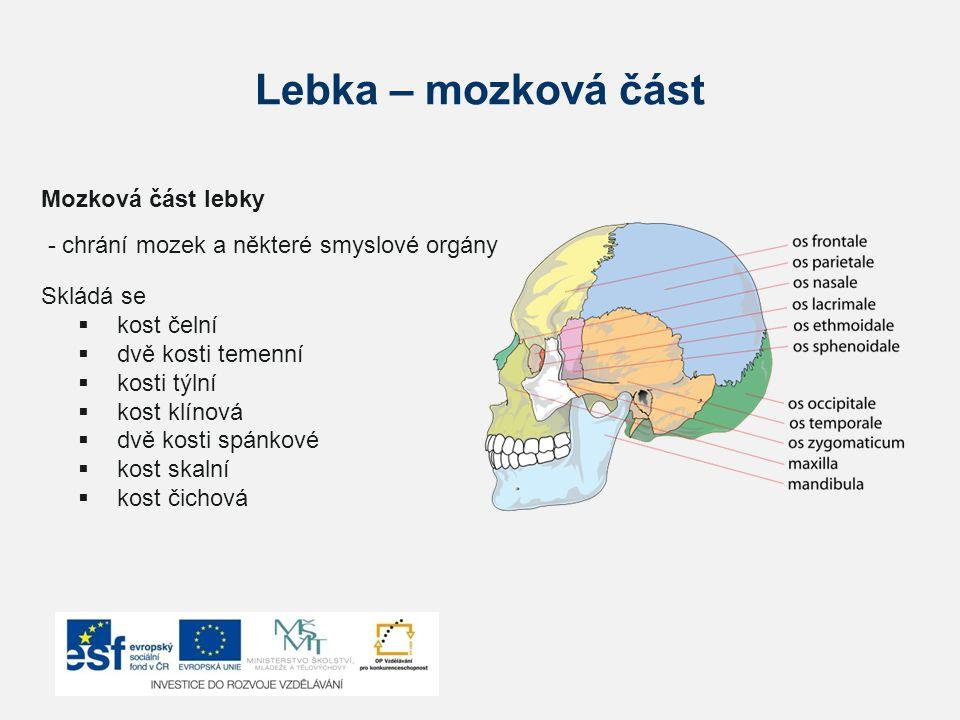 Lebka – mozková část Mozková část lebky