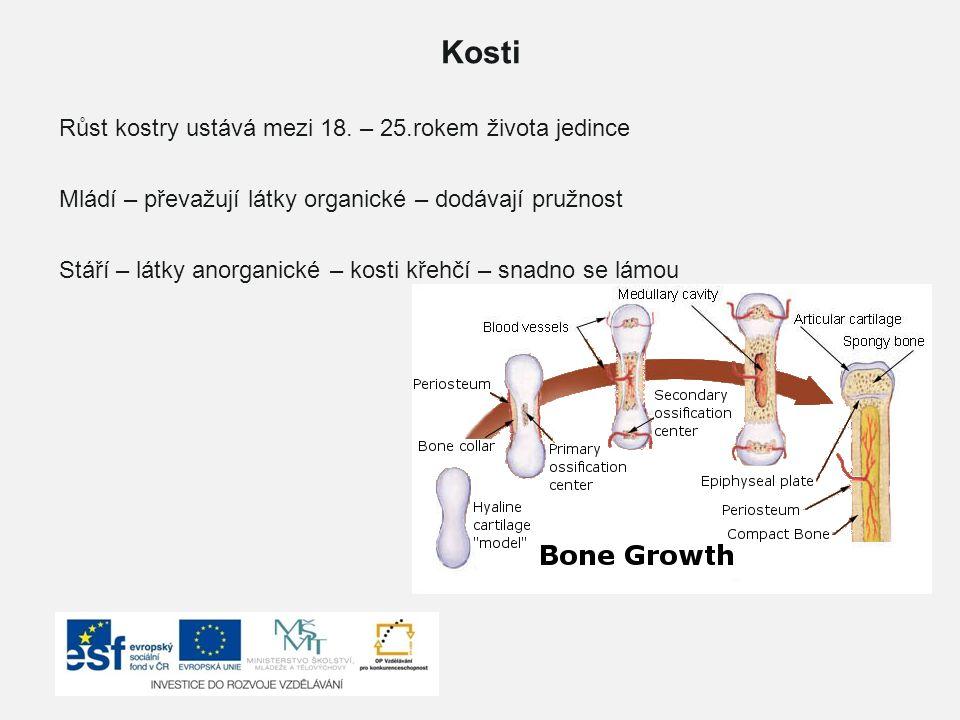 Kosti Růst kostry ustává mezi 18. – 25.rokem života jedince