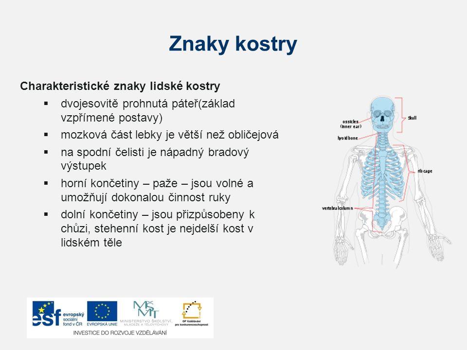Znaky kostry Charakteristické znaky lidské kostry