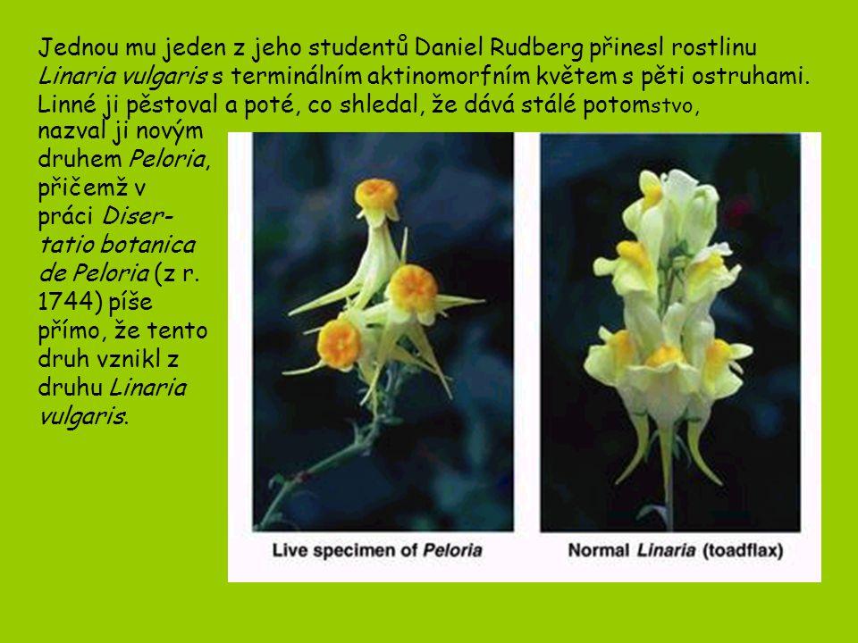 Jednou mu jeden z jeho studentů Daniel Rudberg přinesl rostlinu Linaria vulgaris s terminálním aktinomorfním květem s pěti ostruhami. Linné ji pěstoval a poté, co shledal, že dává stálé potomstvo,