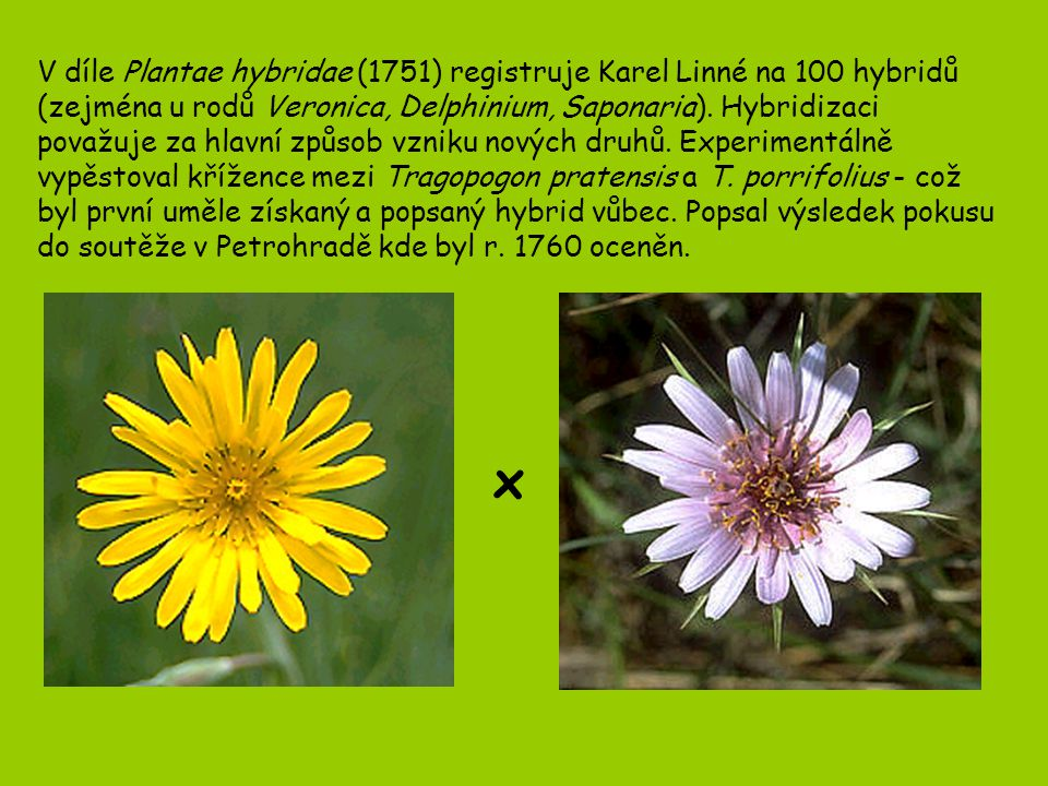 V díle Plantae hybridae (1751) registruje Karel Linné na 100 hybridů (zejména u rodů Veronica, Delphinium, Saponaria). Hybridizaci považuje za hlavní způsob vzniku nových druhů. Experimentálně vypěstoval křížence mezi Tragopogon pratensis a T. porrifolius - což byl první uměle získaný a popsaný hybrid vůbec. Popsal výsledek pokusu do soutěže v Petrohradě kde byl r. 1760 oceněn.