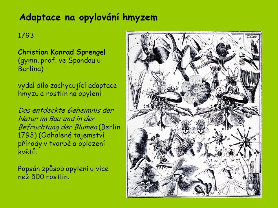 Adaptace na opylování hmyzem