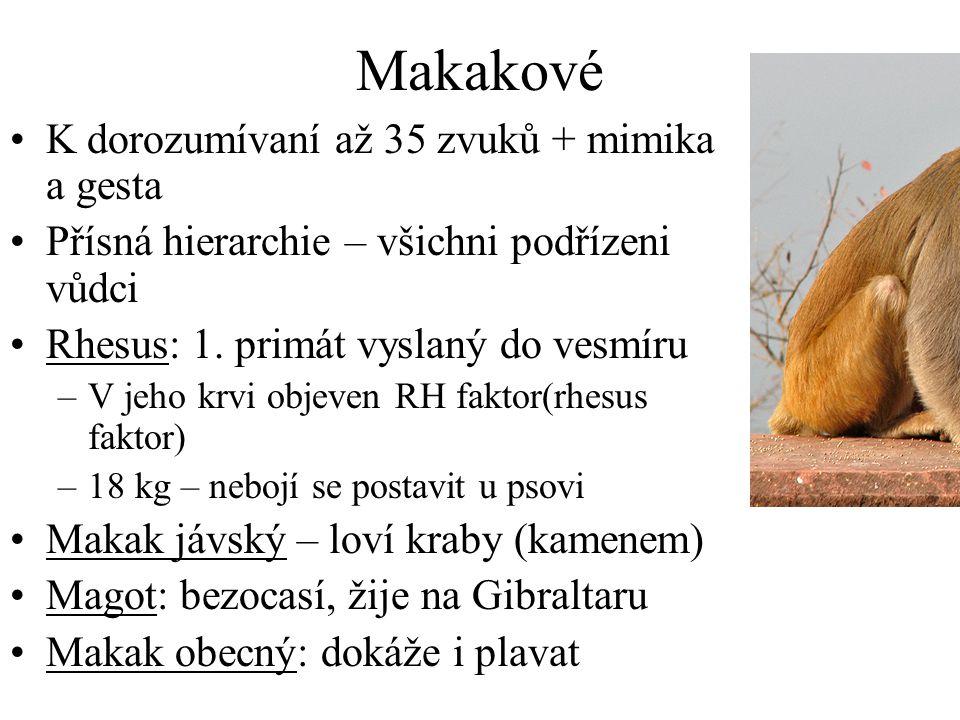 Makakové K dorozumívaní až 35 zvuků + mimika a gesta