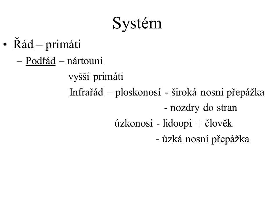 Systém Řád – primáti Podřád – nártouni vyšší primáti