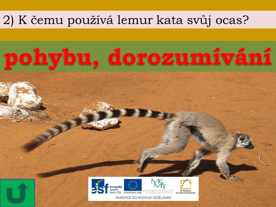 2) K čemu používá lemur kata svůj ocas