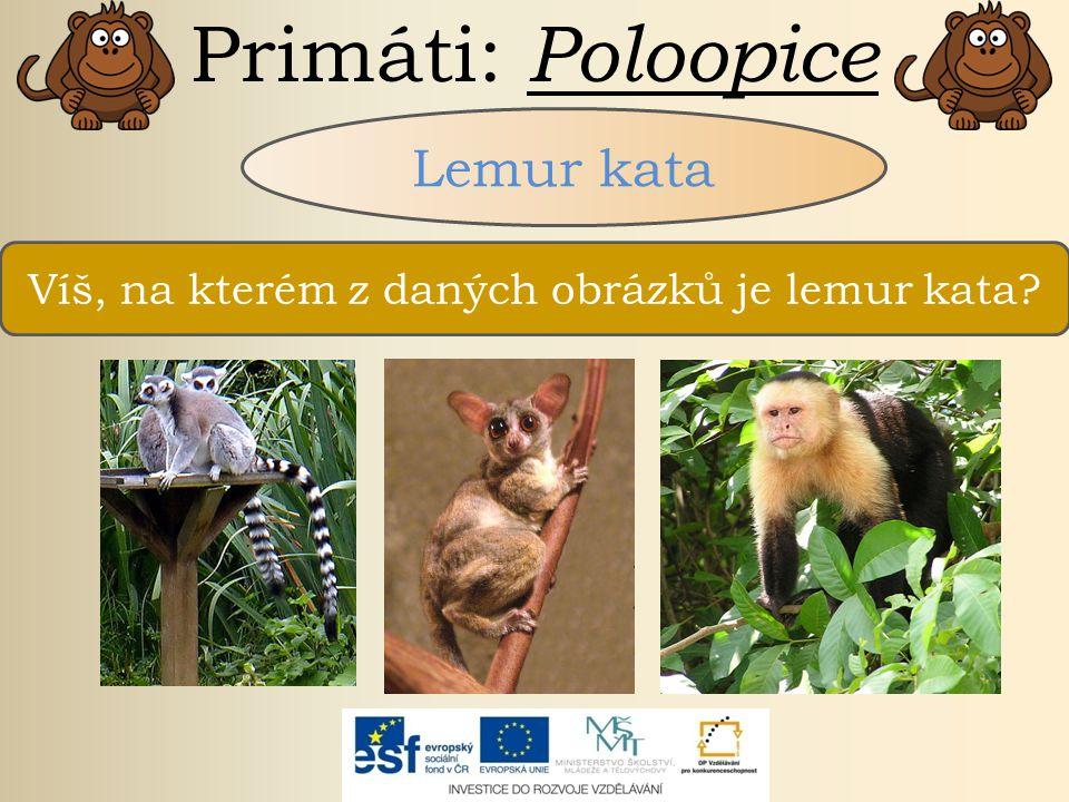 Víš, na kterém z daných obrázků je lemur kata