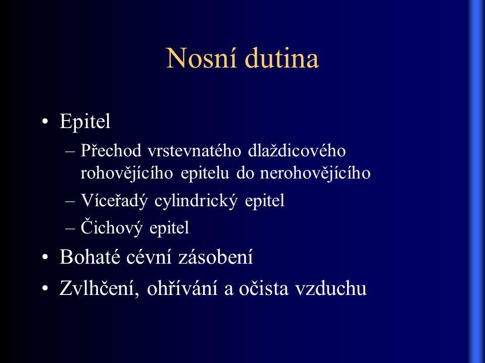 Nosní dutina Epitel Bohaté cévní zásobení