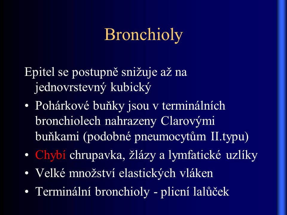 Bronchioly Epitel se postupně snižuje až na jednovrstevný kubický