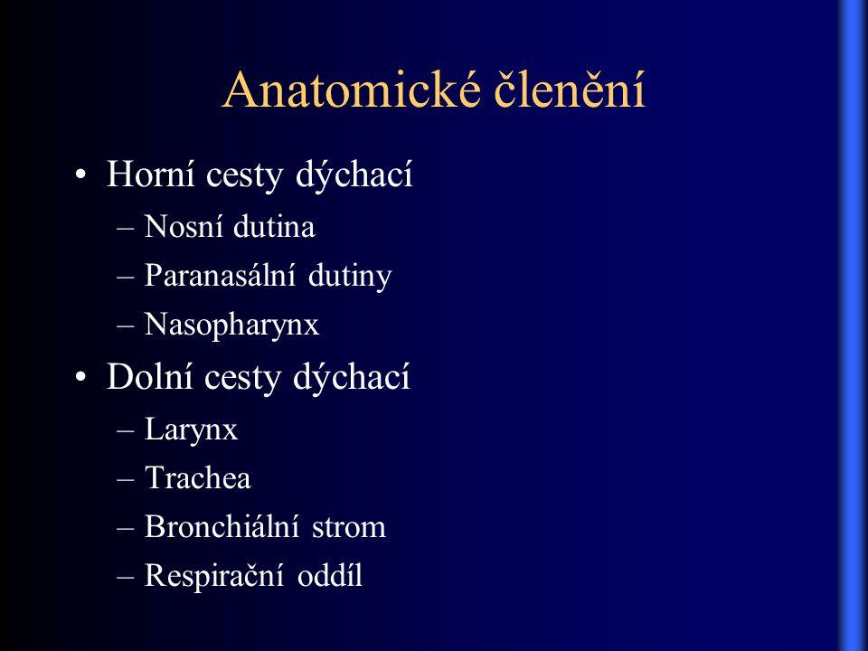 Anatomické členění Horní cesty dýchací Dolní cesty dýchací