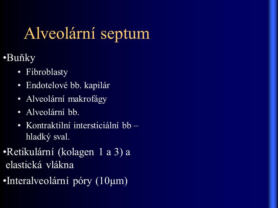 Alveolární septum Buňky Retikulární (kolagen 1 a 3) a elastická vlákna