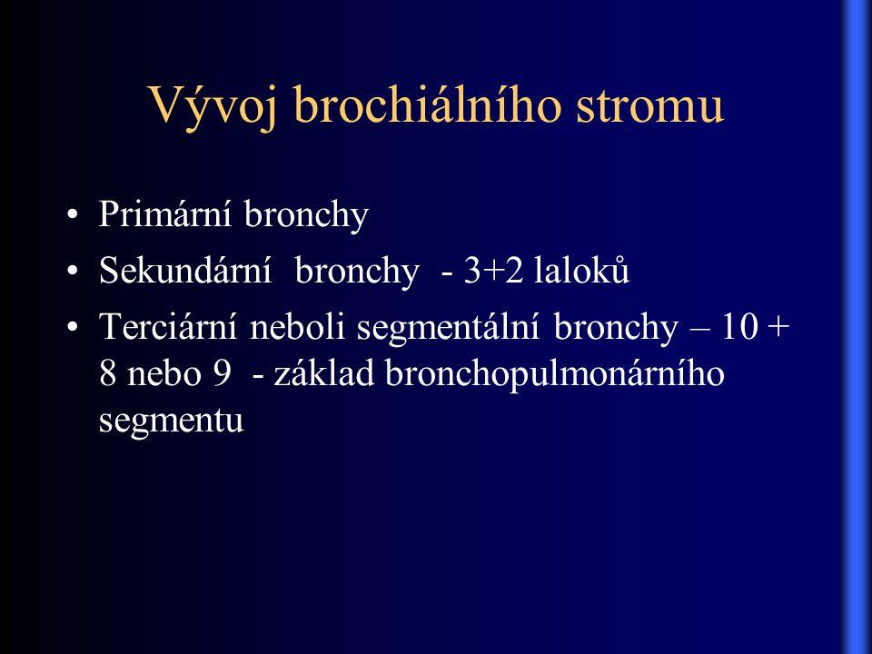 Vývoj brochiálního stromu