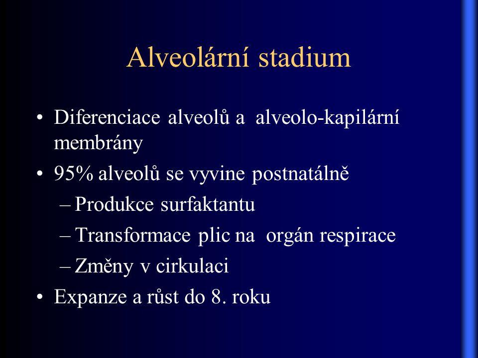 Alveolární stadium Diferenciace alveolů a alveolo-kapilární membrány