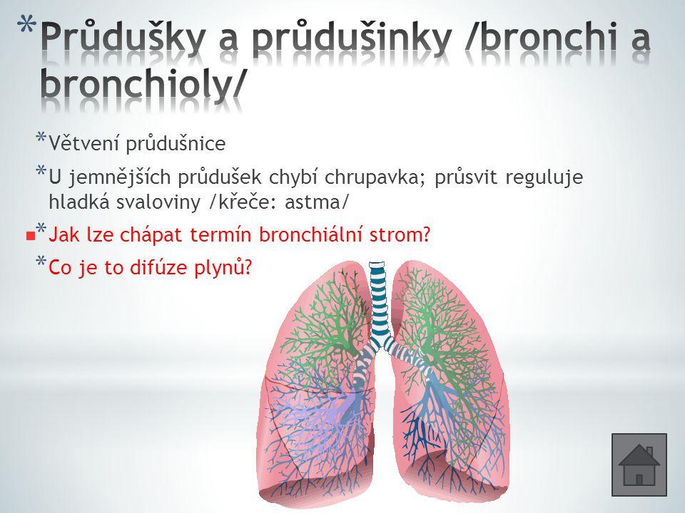 Průdušky a průdušinky /bronchi a bronchioly/