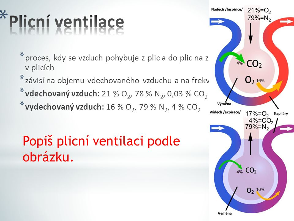 Plicní ventilace Popiš plicní ventilaci podle obrázku.