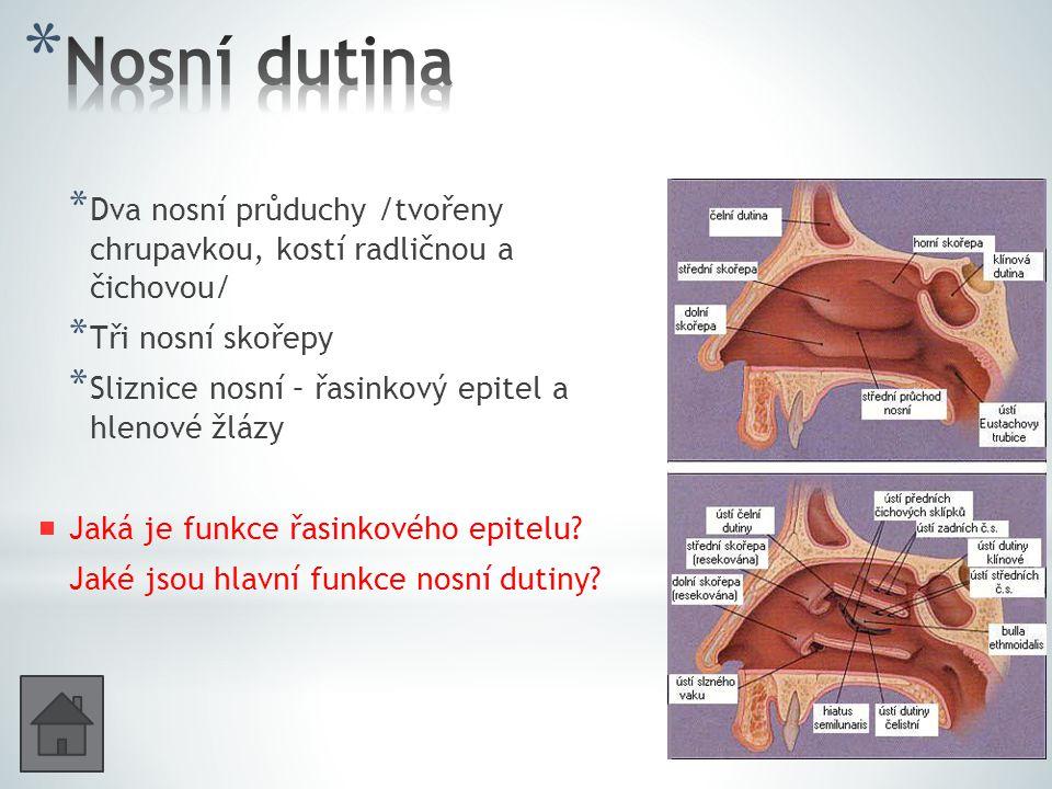 Nosní dutina Dva nosní průduchy /tvořeny chrupavkou, kostí radličnou a čichovou/ Tři nosní skořepy.