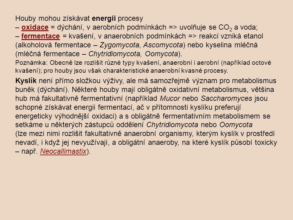 Houby mohou získávat energii procesy