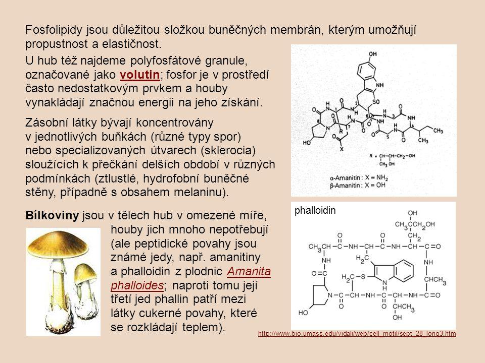 Fosfolipidy jsou důležitou složkou buněčných membrán, kterým umožňují propustnost a elastičnost.
