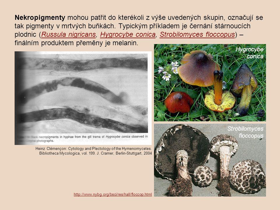 Nekropigmenty mohou patřit do kterékoli z výše uvedených skupin, označují se tak pigmenty v mrtvých buňkách. Typickým příkladem je černání stárnoucích plodnic (Russula nigricans, Hygrocybe conica, Strobilomyces floccopus) – finálním produktem přeměny je melanin.