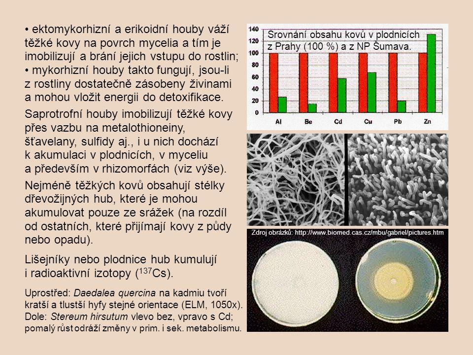 Lišejníky nebo plodnice hub kumulují i radioaktivní izotopy (137Cs).