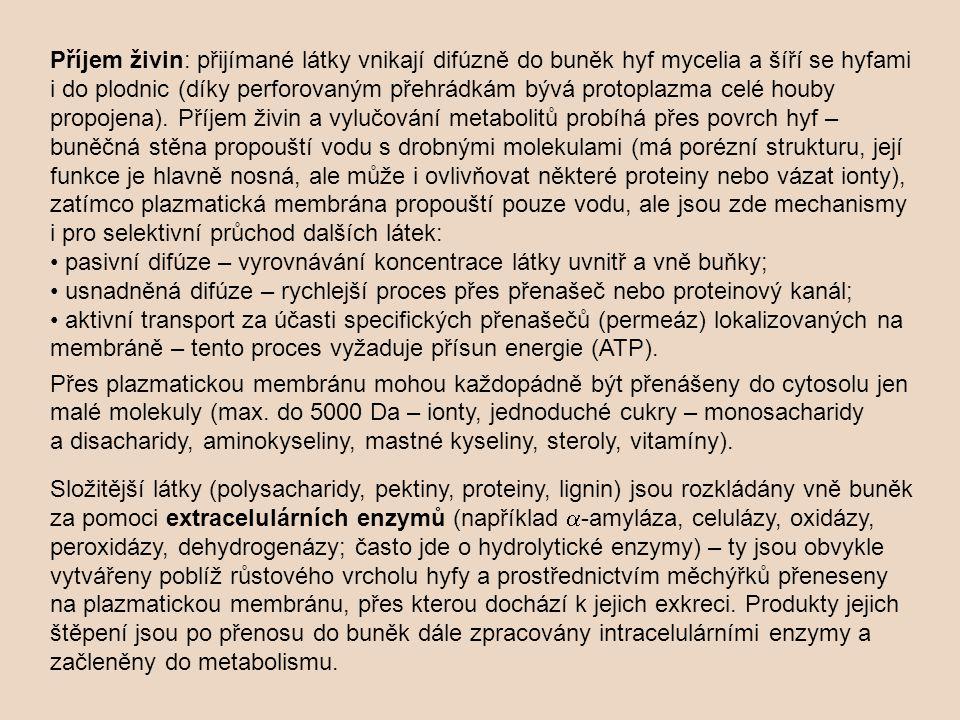 Příjem živin: přijímané látky vnikají difúzně do buněk hyf mycelia a šíří se hyfami i do plodnic (díky perforovaným přehrádkám bývá protoplazma celé houby propojena). Příjem živin a vylučování metabolitů probíhá přes povrch hyf – buněčná stěna propouští vodu s drobnými molekulami (má porézní strukturu, její funkce je hlavně nosná, ale může i ovlivňovat některé proteiny nebo vázat ionty), zatímco plazmatická membrána propouští pouze vodu, ale jsou zde mechanismy i pro selektivní průchod dalších látek: • pasivní difúze – vyrovnávání koncentrace látky uvnitř a vně buňky; • usnadněná difúze – rychlejší proces přes přenašeč nebo proteinový kanál; • aktivní transport za účasti specifických přenašečů (permeáz) lokalizovaných na membráně – tento proces vyžaduje přísun energie (ATP).