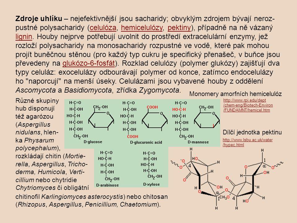 Zdroje uhlíku – nejefektivnější jsou sacharidy; obvyklým zdrojem bývají neroz-pustné polysacharidy (celulóza, hemicelulózy, pektiny), případně na ně vázaný lignin. Houby nejprve potřebují uvolnit do prostředí extracelulární enzymy, jež rozloží polysacharidy na monosacharidy rozpustné ve vodě, které pak mohou projít buněčnou stěnou (pro každý typ cukru je specifický přenašeč, v buňce jsou převedeny na glukózo-6-fosfát). Rozklad celulózy (polymer glukózy) zajišťují dva typy celuláz: exocelulázy odbourávají polymer od konce, zatímco endocelulázy ho naporcují na menší úseky. Celulázami jsou vybavené houby z oddělení Ascomycota a Basidiomycota, zřídka Zygomycota.
