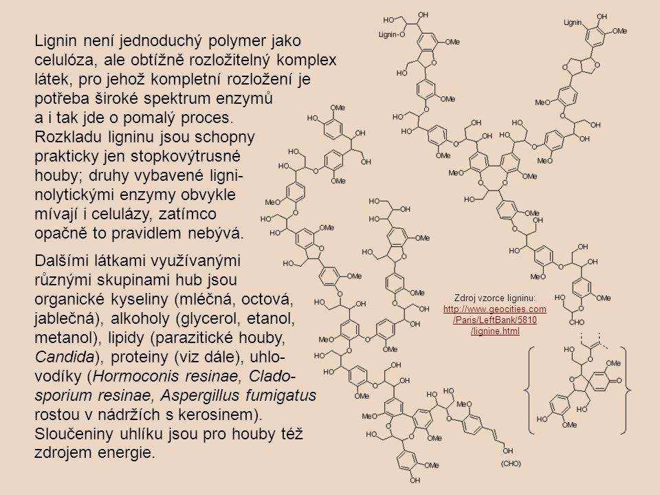 Lignin není jednoduchý polymer jako celulóza, ale obtížně rozložitelný komplex látek, pro jehož kompletní rozložení je potřeba široké spektrum enzymů a i tak jde o pomalý proces. Rozkladu ligninu jsou schopny prakticky jen stopkovýtrusné houby; druhy vybavené ligni-nolytickými enzymy obvykle mívají i celulázy, zatímco opačně to pravidlem nebývá.