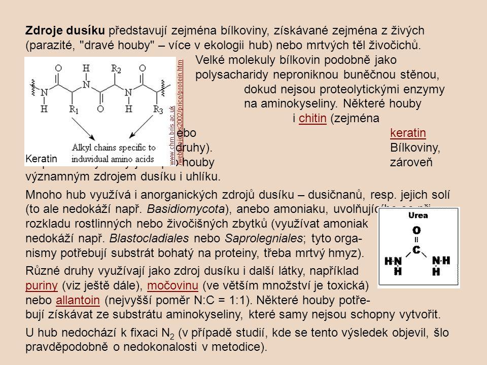 Různé druhy využívají jako zdroj dusíku i další látky, například