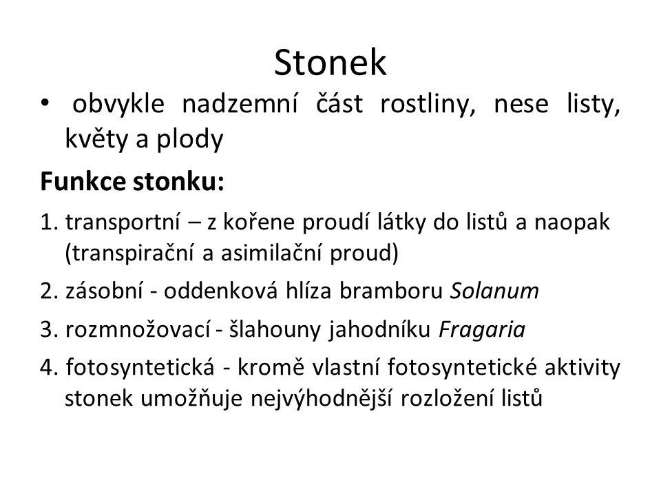 Stonek obvykle nadzemní část rostliny, nese listy, květy a plody