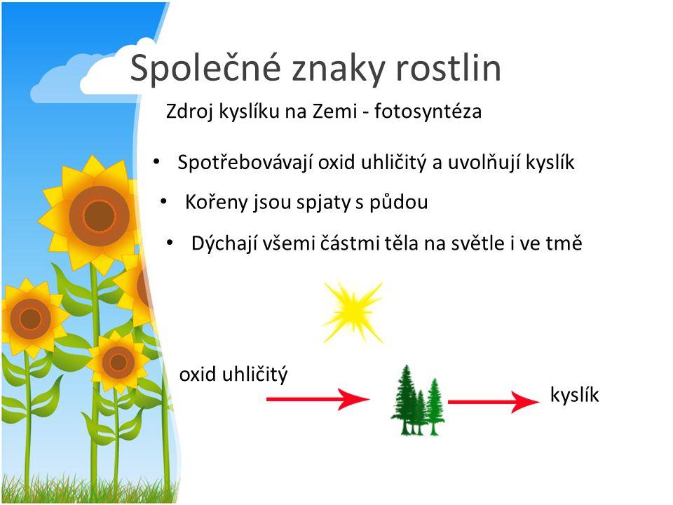 Společné znaky rostlin