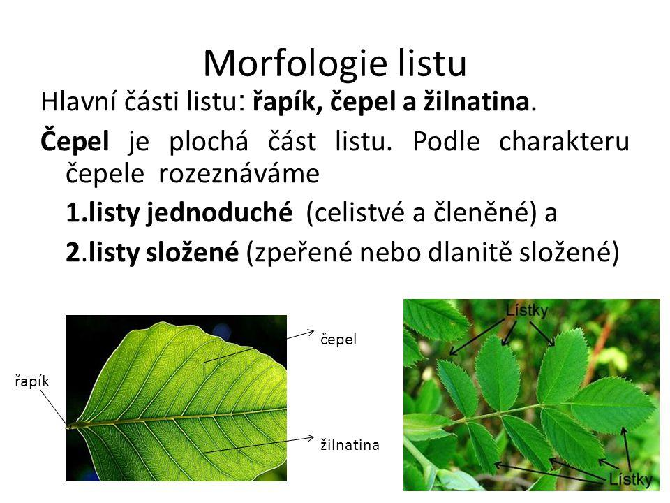 Morfologie listu Hlavní části listu: řapík, čepel a žilnatina.