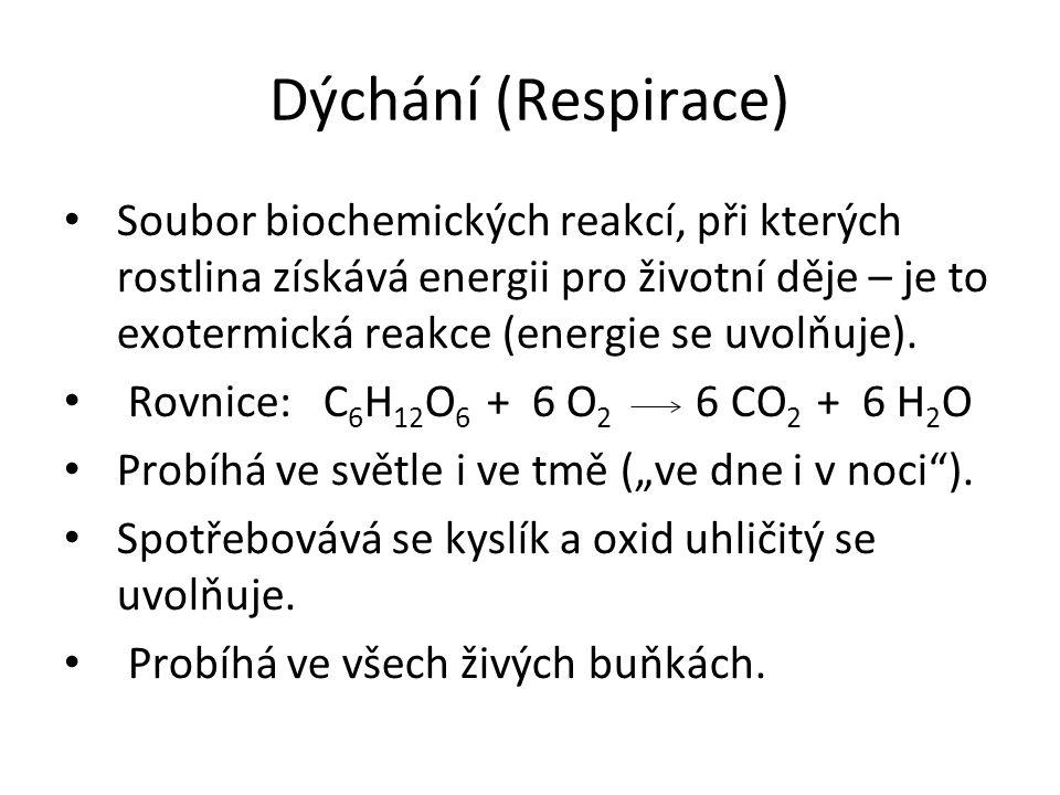Dýchání (Respirace)