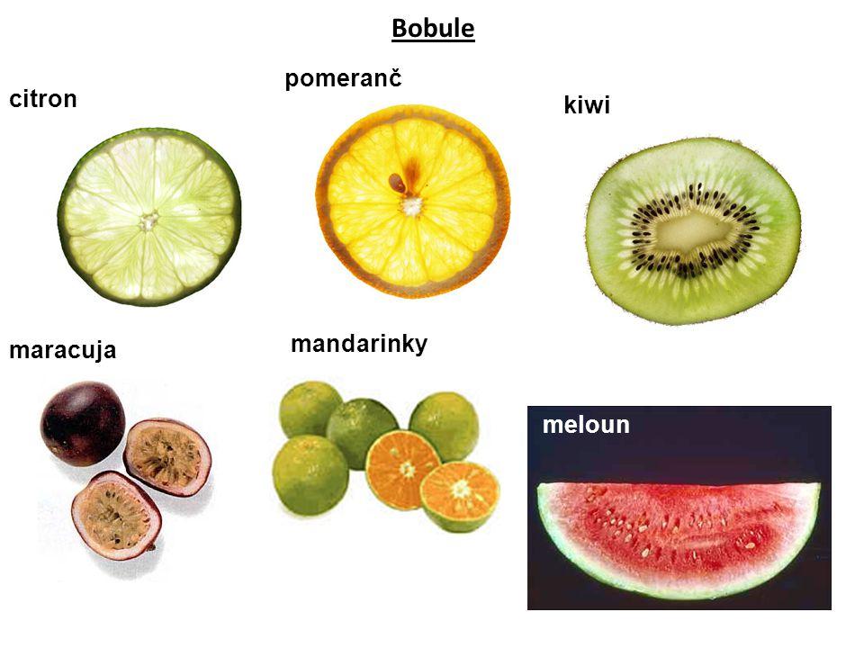 Bobule pomeranč citron kiwi mandarinky maracuja meloun