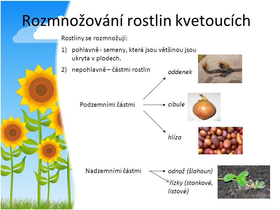 Rozmnožování rostlin kvetoucích