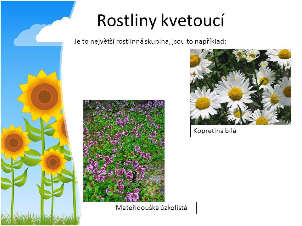 Rostliny kvetoucí Je to největší rostlinná skupina, jsou to například: