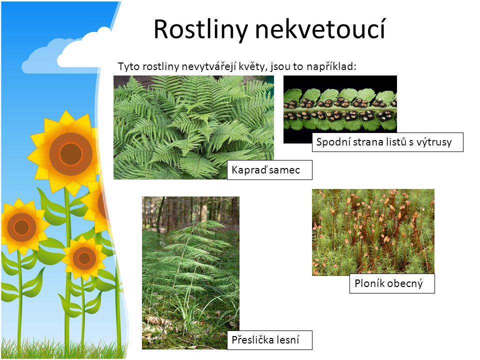 Rostliny nekvetoucí Tyto rostliny nevytvářejí květy, jsou to například: Spodní strana listů s výtrusy.