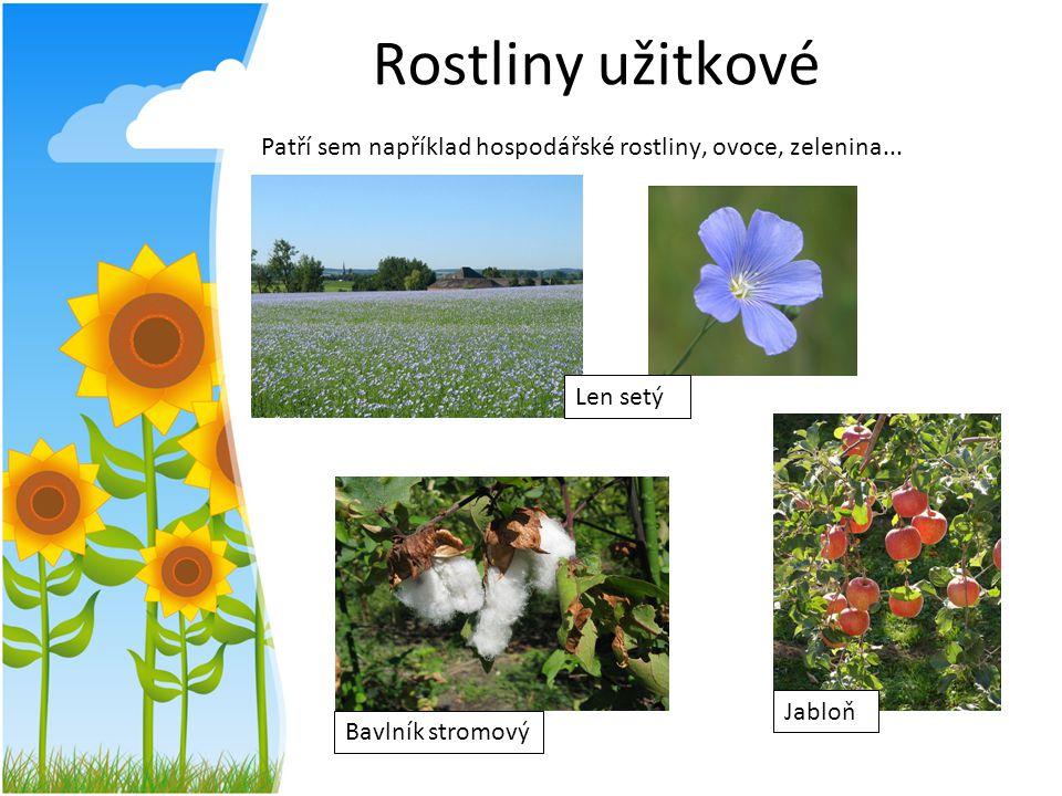 Rostliny užitkové Patří sem například hospodářské rostliny, ovoce, zelenina...
