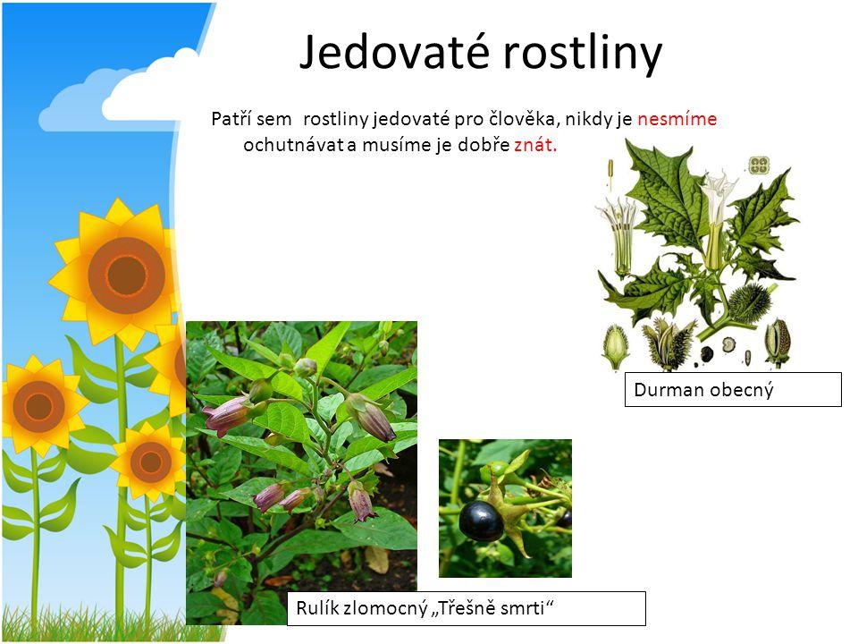Jedovaté rostliny Patří sem rostliny jedovaté pro člověka, nikdy je ochutnávat a musíme je dobře znát.