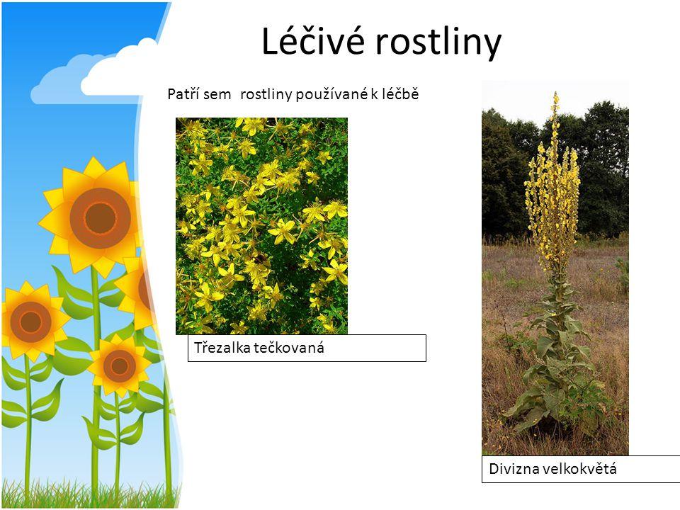 Léčivé rostliny Patří sem rostliny používané k léčbě