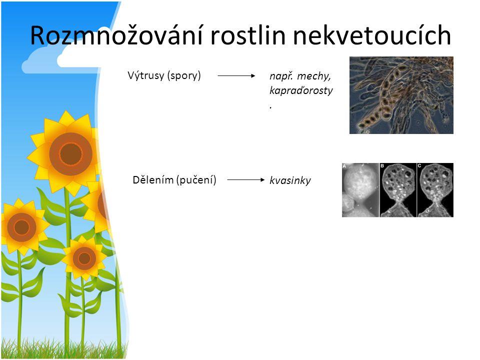 Rozmnožování rostlin nekvetoucích
