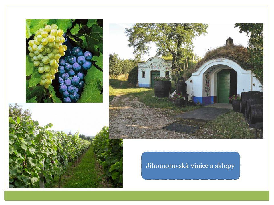 Jihomoravská vinice a sklepy